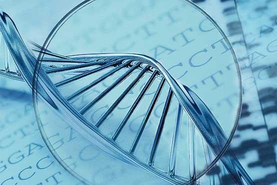 635952096007072994 - تاراج ذخایر ژنتیکی قاره آفریقا و ذخایر ژنتیکی قاره آفریقا