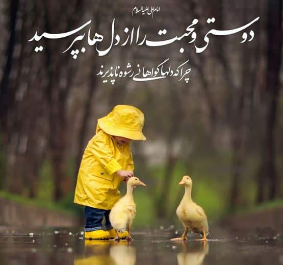 mizane mohebate emam ali 1 - میزان محبت امام علی(ع) چقدر هست